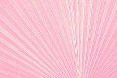 关闭桃红色热带绿色叶子纹理 免版税库存图片