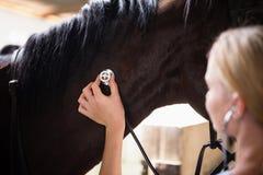 关闭检查马的女性狩医 库存照片