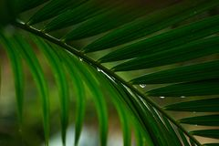 关闭棕榈树叶子  库存照片