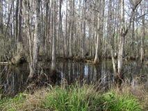 关闭森林 免版税库存图片
