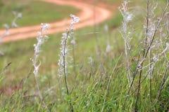 关闭植物的图象一个绿色春天草甸的 免版税图库摄影