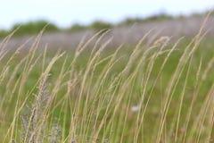 关闭植物的图象一个绿色春天草甸的 免版税库存照片