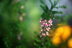 关闭植物的照片 免版税图库摄影