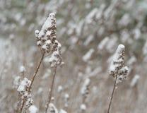 关闭植物茎刀片干燥草覆盖由雪摘要 免版税库存照片