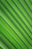 关闭椰子叶子 库存图片