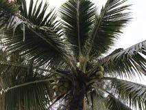 关闭椰子树墙纸 库存照片
