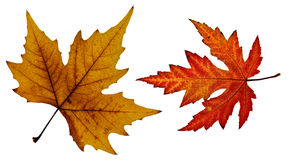 关闭橙色和一片红色秋天叶子的照片 库存照片
