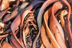 关闭橙色海草的图象 免版税图库摄影