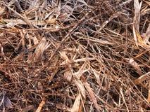 关闭死的棕色金黄叶子背景自然纹理 库存图片