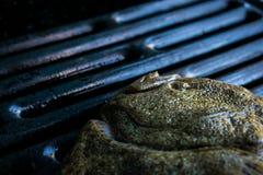 关闭比目鱼或异体类在格栅, Scophthalmus maximus 免版税库存图片