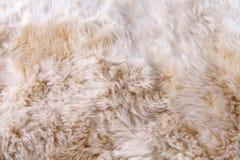 关闭毛皮地毯纹理  库存图片