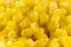 关闭水多的照片一些新鲜玉米  免版税库存图片