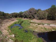 关闭沼泽在佛罗里达 免版税图库摄影