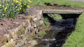关闭流动通过草银行、黄水仙花&老石墙的小河水 股票录像