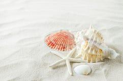 关闭海星和贝壳在白色沙子背景 免版税库存图片