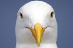 关闭海鸥 库存照片