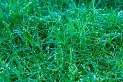 关闭湿的草 免版税库存图片