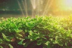 关闭灌木绿色叶子与喷泉水飞溅的在湖在有太阳火光的室外庭院 免版税图库摄影
