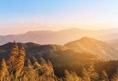 关闭热带草花在日落的热带雨林山顶部 免版税库存照片