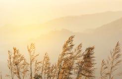 关闭热带草花在日落的热带雨林山顶部 免版税库存图片