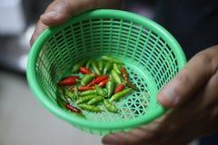 关闭烹调的刺激性食物绿色和红辣椒 免版税库存照片