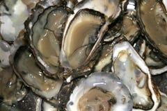关闭牡蛎  免版税库存图片