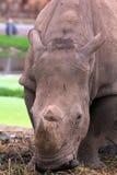 关闭犀牛 库存图片