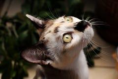 关闭猫面孔, A猫是查寻 库存照片