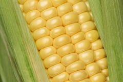 关闭玉米 库存图片