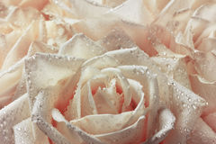 关闭玫瑰花瓣宏观射击在水下落、春天和葡萄酒花卉背景的 免版税库存图片