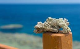 关闭珊瑚或礁石片断在木篱芭反对 库存图片