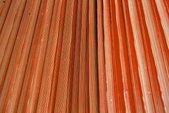 关闭生动的热带珊瑚叶子纹理 免版税库存图片