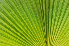 关闭生动的热带绿色叶子纹理 免版税库存照片