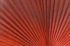 关闭生动的红色热带棕榈叶纹理 免版税图库摄影
