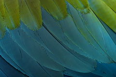 关闭用羽毛装饰绿色金刚鹦鹉红色  库存图片