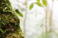 关闭用青苔盖的一棵下落的树的树干在明亮的阳光下 免版税库存图片