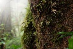 关闭用青苔盖的一棵下落的树的树干在明亮的阳光下 库存照片
