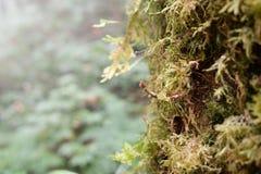 关闭用青苔盖的一棵下落的树的树干在明亮的阳光下 免版税图库摄影