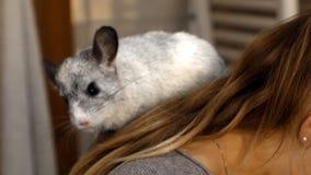 关闭由女孩爱抚的黄鼠 免版税库存照片