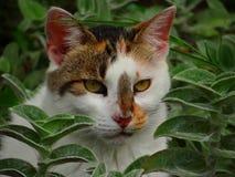 关闭由猫` s面孔决定 免版税库存照片