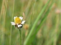 关闭由草开花花决定在自然背景中,有选择性 免版税图库摄影