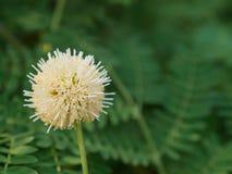 关闭由草开花花决定在自然背景中,有选择性 库存照片