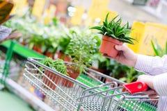 关闭男人或妇女手为买罐的绿色植物和投入他们选择在购物车或台车在超级市场 免版税库存图片