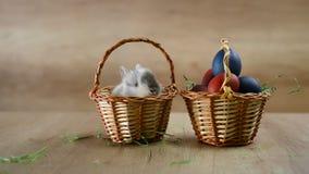 关闭男孩拿着鸡蛋的` s手,并且刷子,上色为复活节怂恿 股票视频