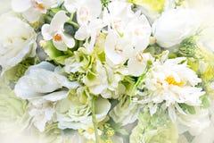 关闭白色花束花-抽象柔光样式 免版税库存图片