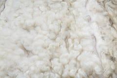 关闭白色被洗染的羊皮地毯作为背景 图库摄影