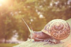 关闭的综合图象在一个木板条的一只蜗牛 免版税库存照片