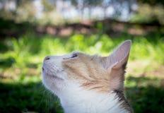 关闭看一只鸟的美丽的杂色猫在树ou中 库存图片