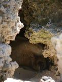 关闭睡觉在岩石下的海狮 免版税图库摄影