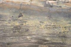 关闭石化树表面 图库摄影